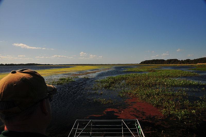 oct 31 2557 algae