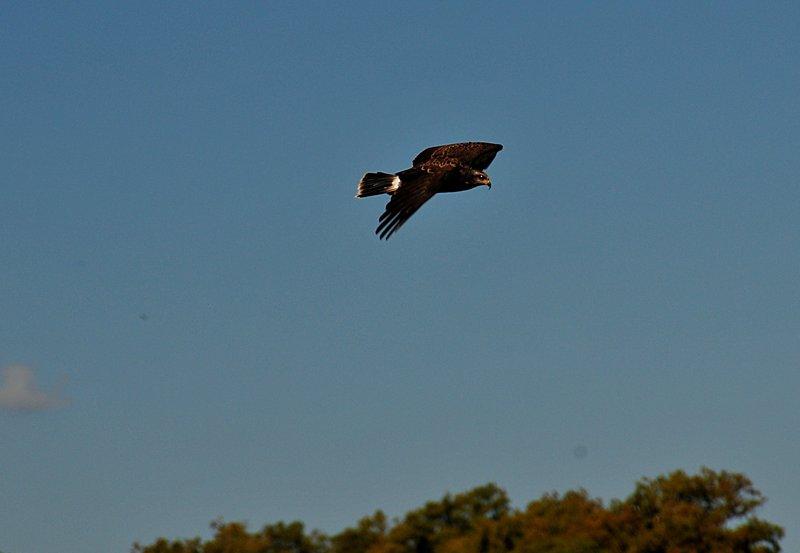 oct 31 2620 hawk
