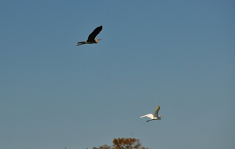 oct 31 2703 flying pair