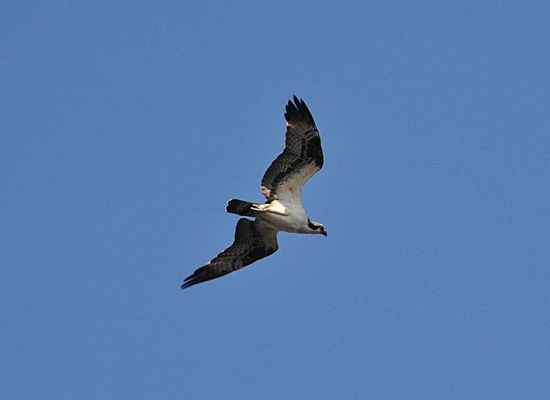 oct 31 3021 seagull
