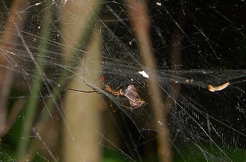 sep 01 4070 male prey close