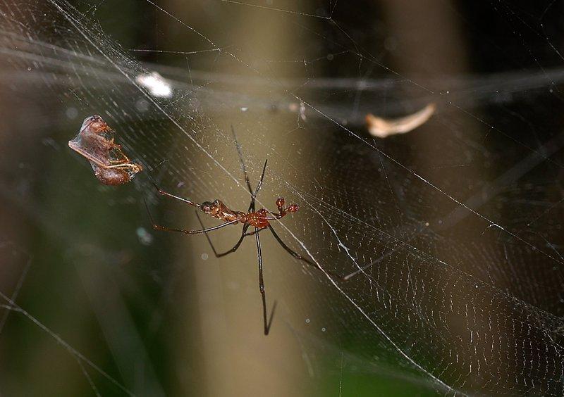 sep 01 4079 web male prey close