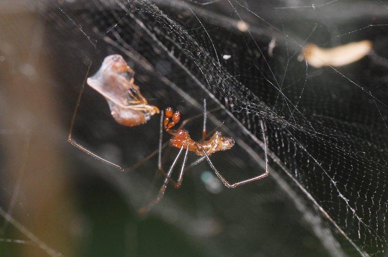 sep 01 4089 male prey