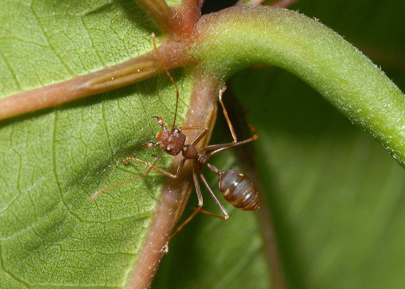 sep 01 4140 ant