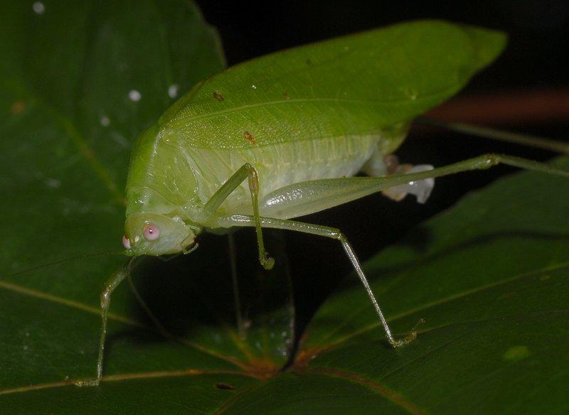 sep 01 4283 grasshopper