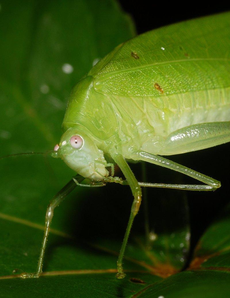 sep 01 4287 grasshopper