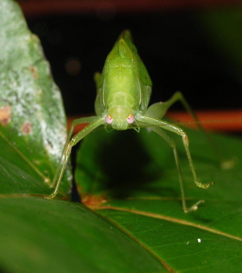 sep 01 4296 grasshopper front
