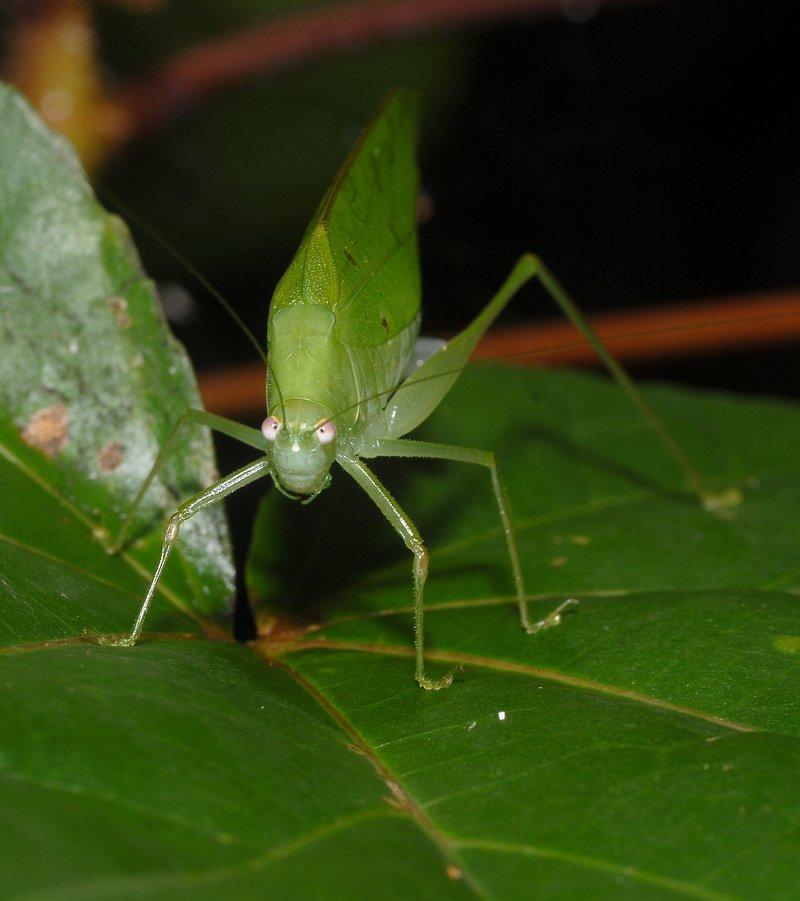 sep 01 4310 grasshopper front
