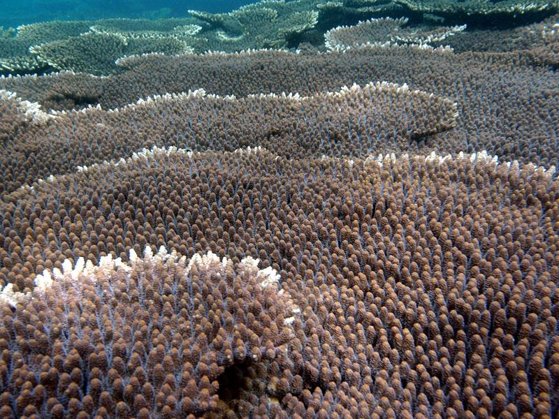 sep 03 2864 healthy acropora