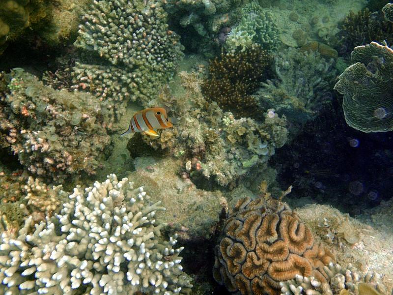 sep 04 0299 coral fish