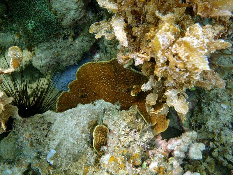 sep 04 0328 orange coral