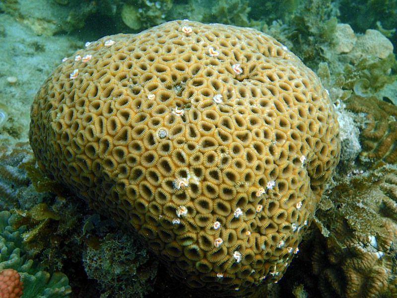 sep 04 0349 annular coral
