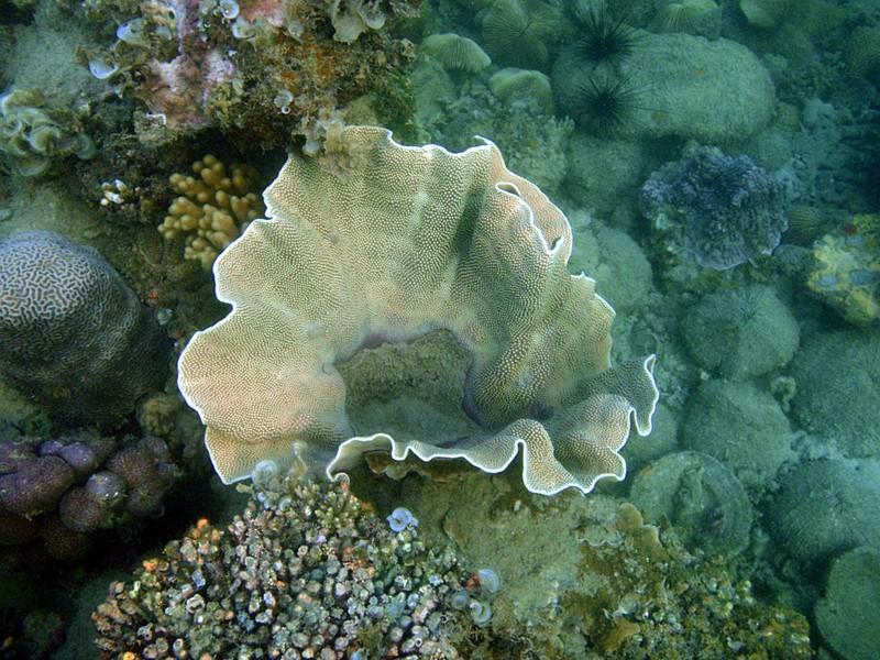 sep 04 0370 cone coral