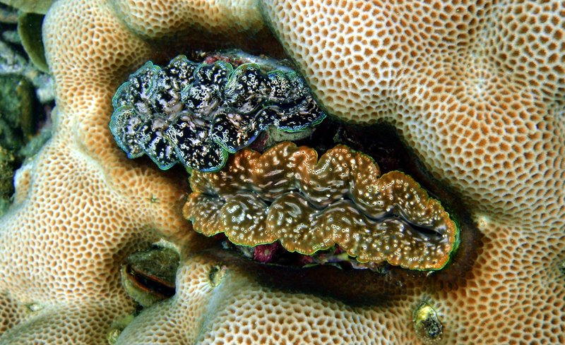 sep 05 0060 2 clams