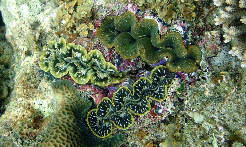sep 05 0064 3 clams