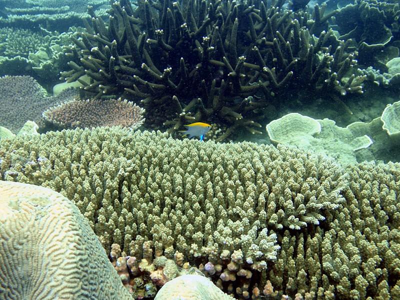 sep 05 0092 colorful fish