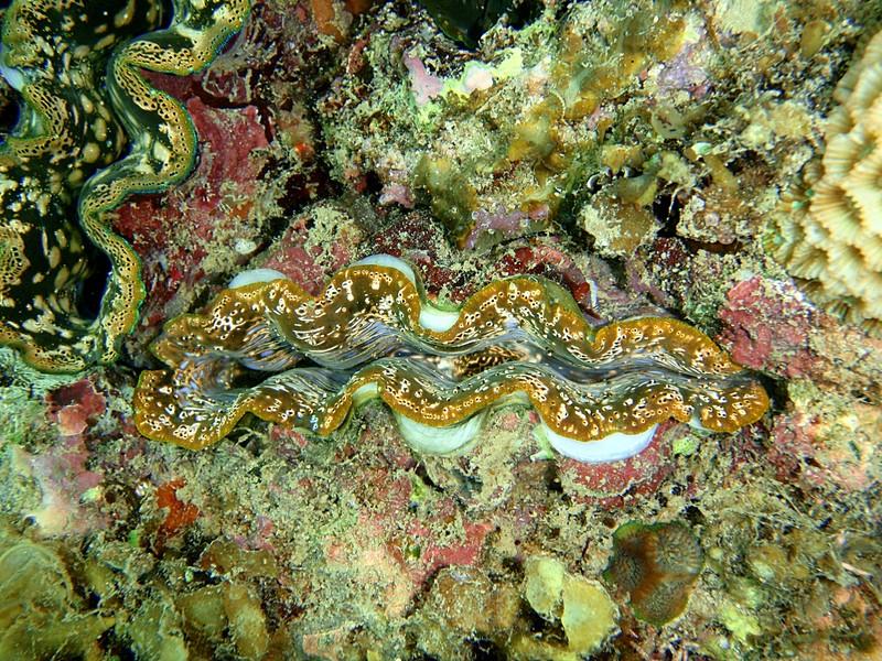 sep 05 0138 orange clam