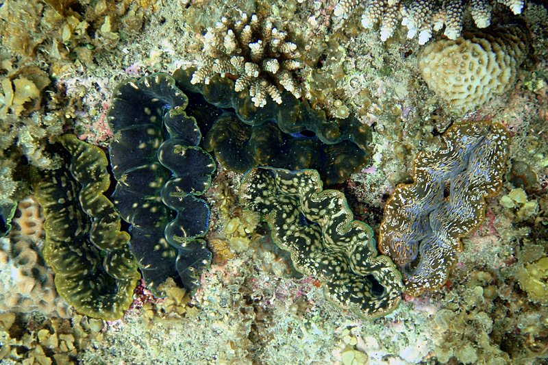 sep 05 0149 many clams