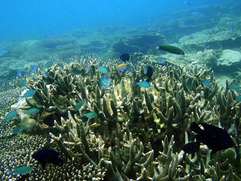 sep 05 0176 fish coral