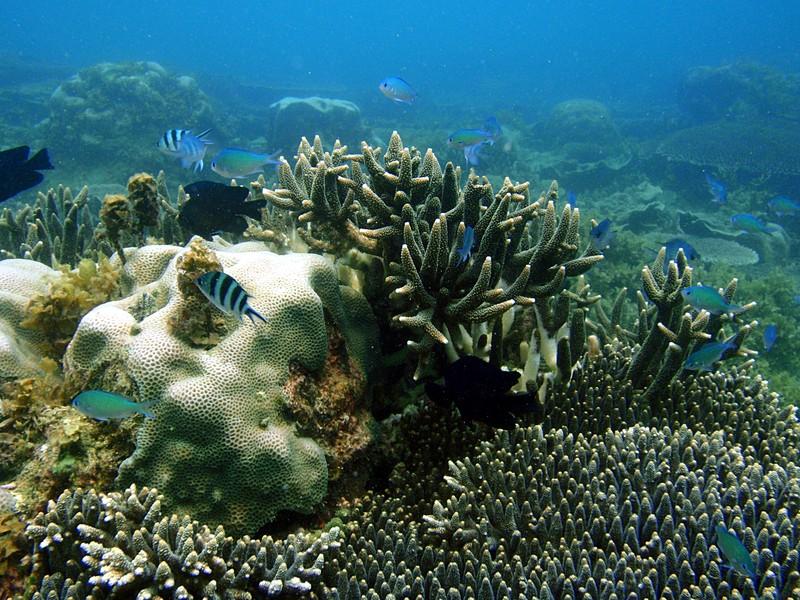 sep 05 0185 colorful fish coral