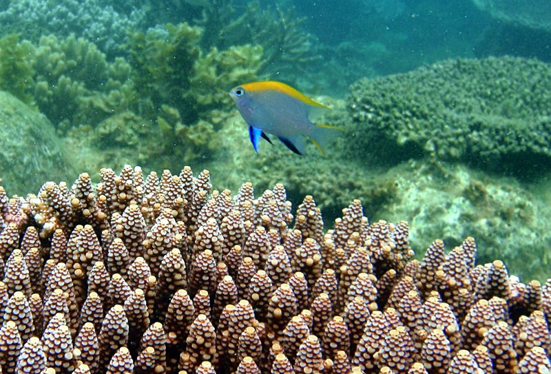 sep 05 0227 colorful fish
