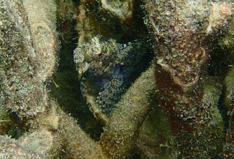 sep 05 0243 rock fish head