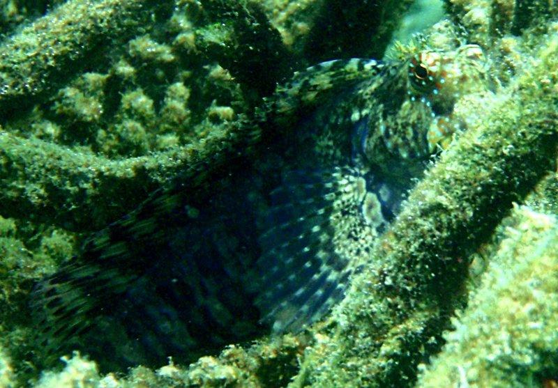 sep 05 0246 rock fish