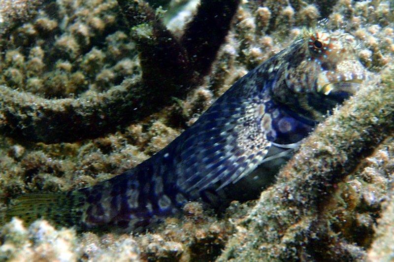 sep 05 0247 rock fish