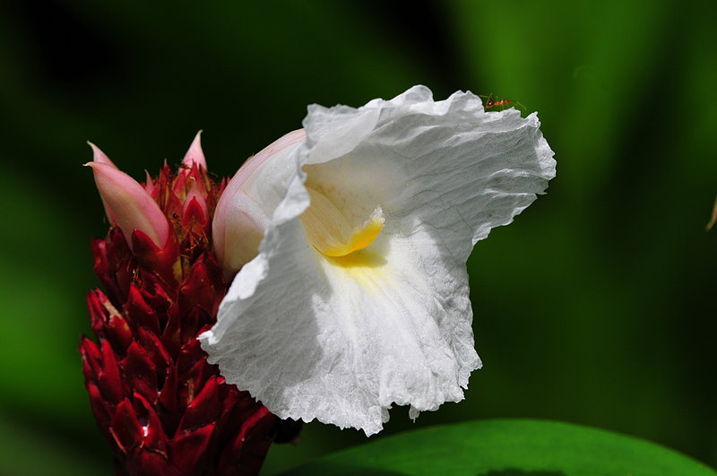 sep 06 0311 flower