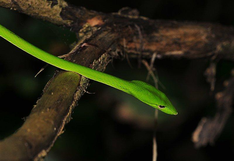 sep 06 0345 green snake