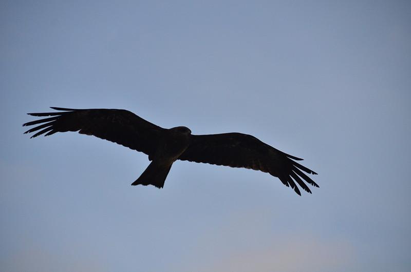 sep 08 9542 big bird