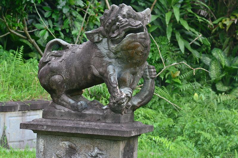 sep 14 6586 male lion