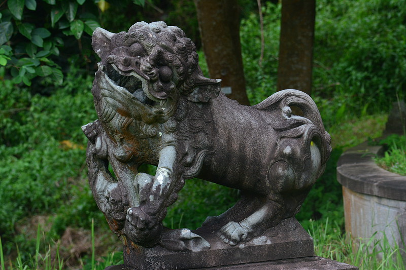 sep 14 6588 female lion