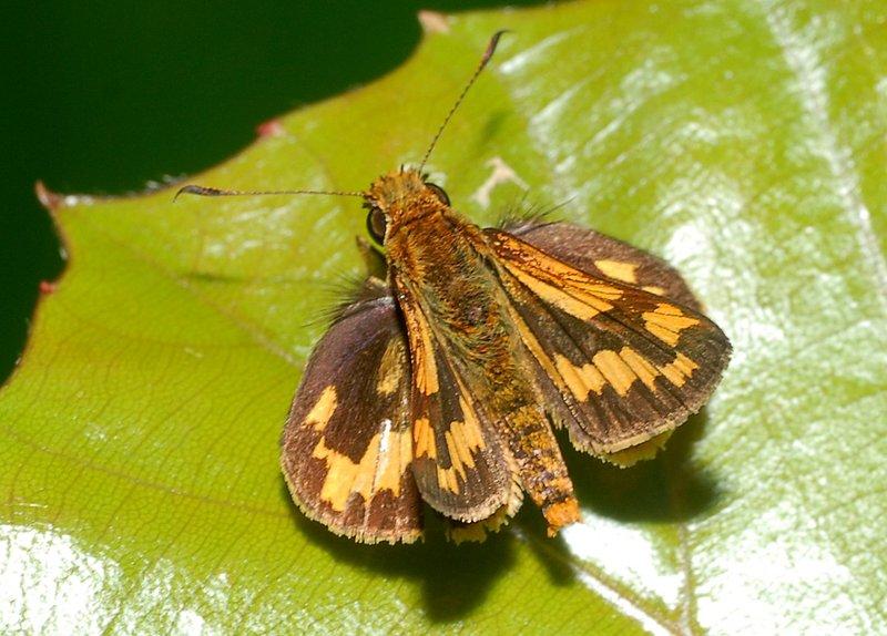 sep 15 4759 moth