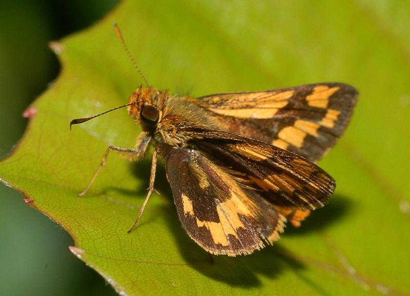 sep 15 4760 moth