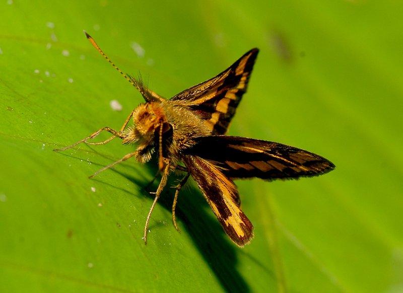 sep 15 4763 moth