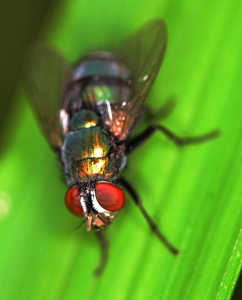 sep 16 0253 fly eye