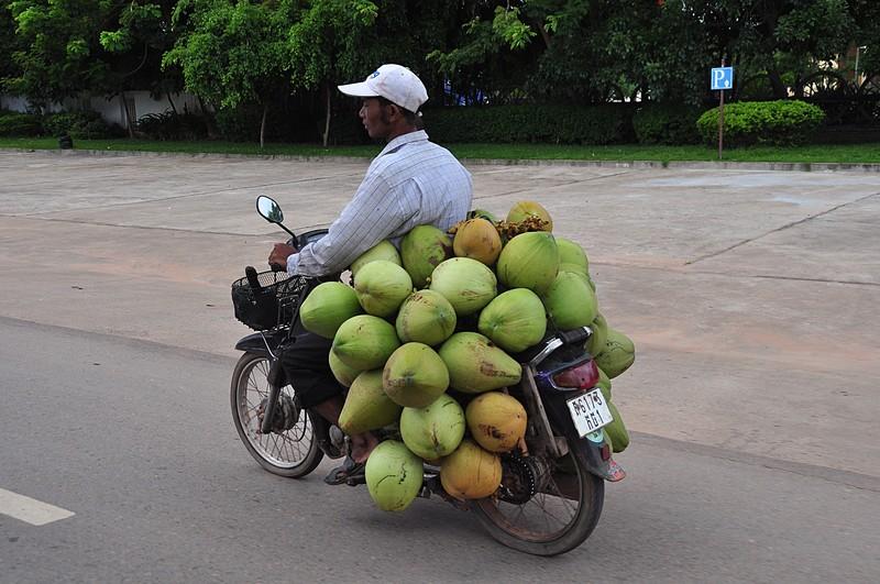 sep 16 8542 coconut xport