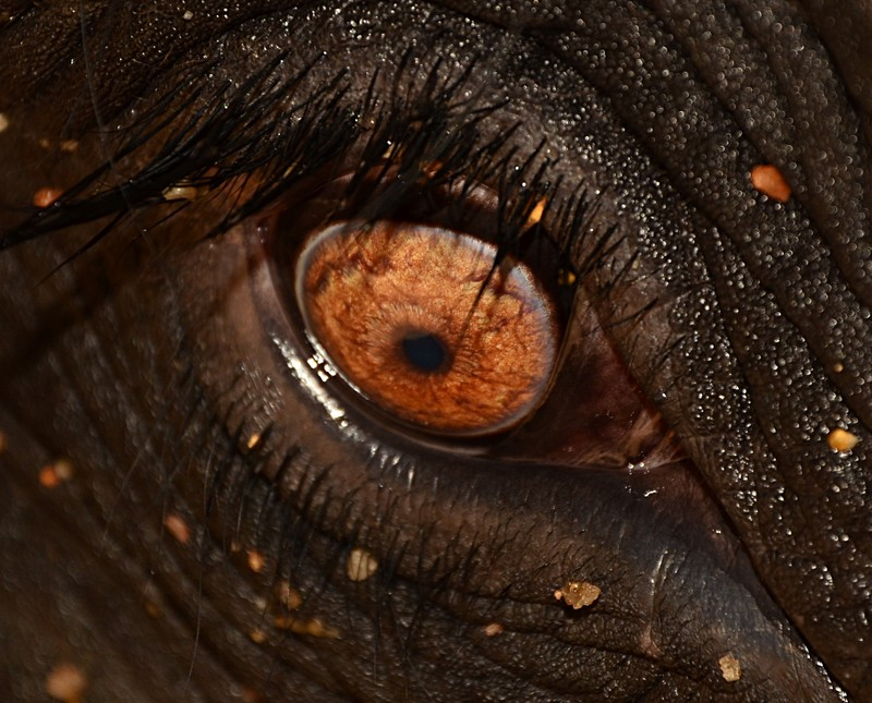 sep 17 8660 elephant eye