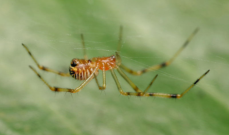 the spider and the wasp essay The essay is developed in a straightforward manner, describing the spider and  the wasp respectively in great detail to provide the background.