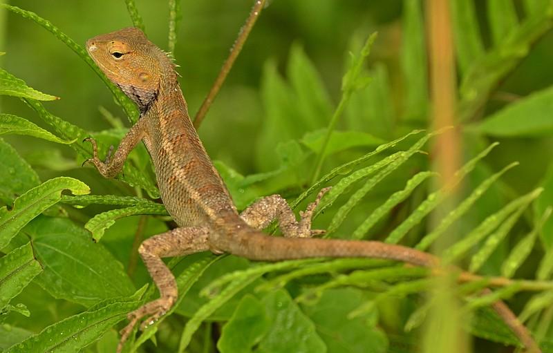 sep 22 0302 lizard