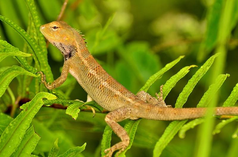sep 22 0303 lizard