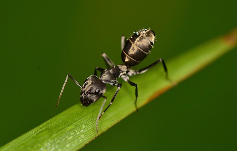 sep 22 0321 black ant