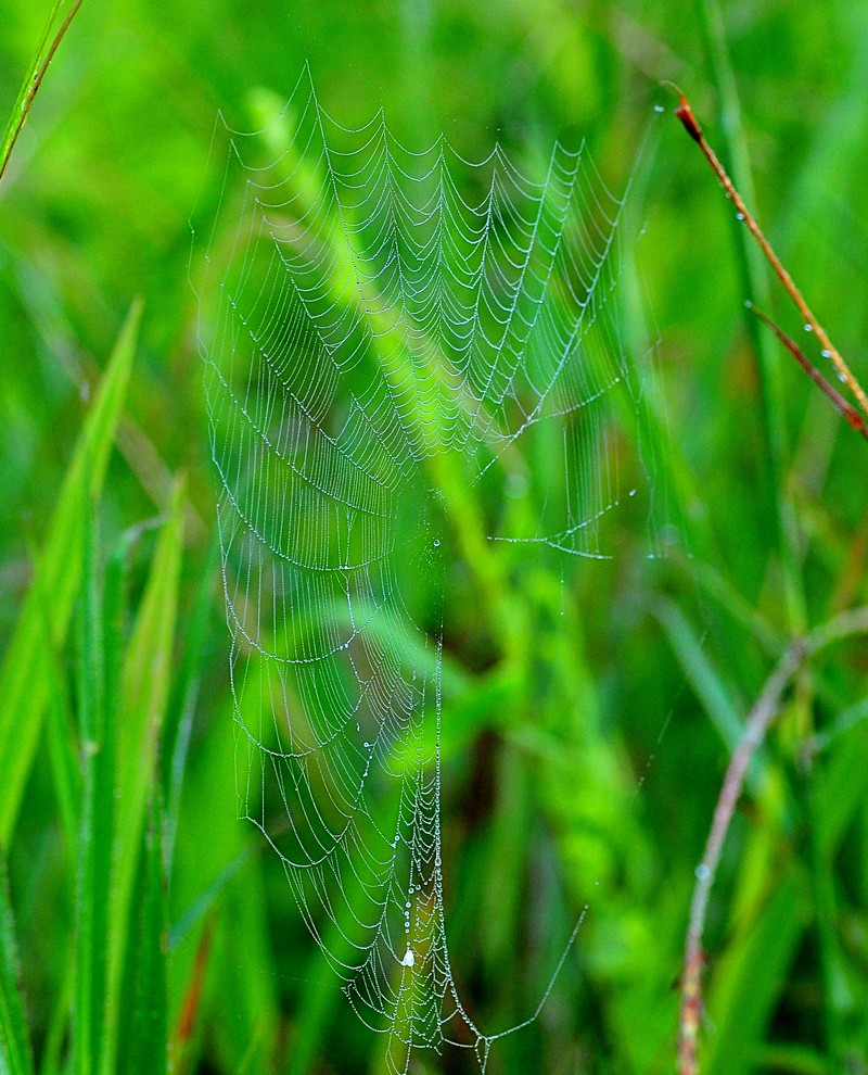 sep 25 0773 wet web