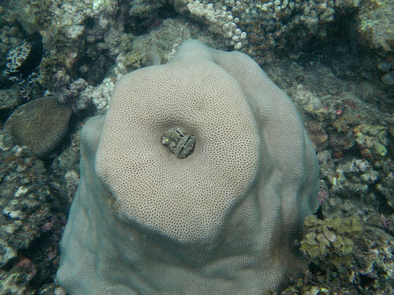sep 26 1776 clam coral