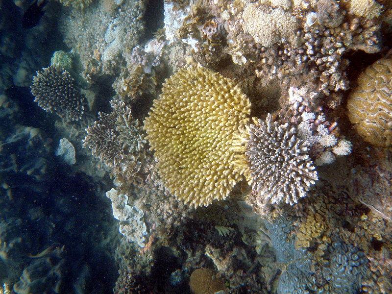 sep 26 1836 pretty coral