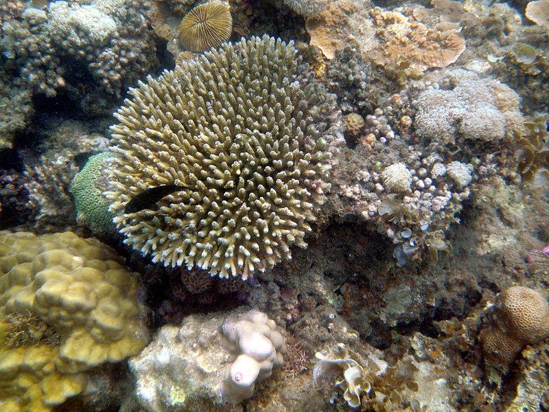 sep 26 1840 coral fish