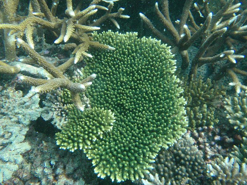 sep 26 2003 green coral