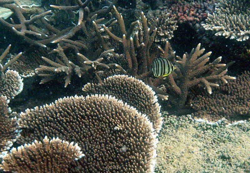 sep 26 2051 fish