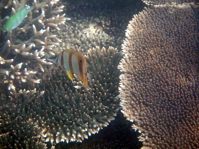sep 27 2081 yellow stripe snout